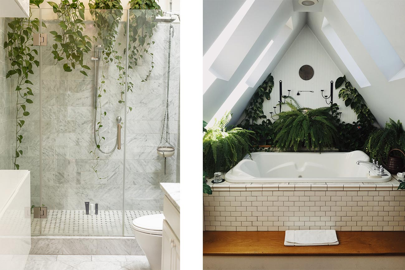 Piante in bagno, zona doccia e vasca.
